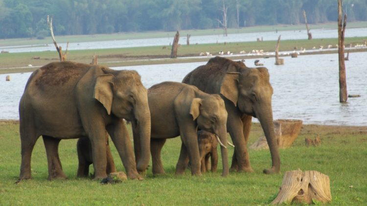 Elephant%20Herd%20by%20Kabini%20River_0[1]